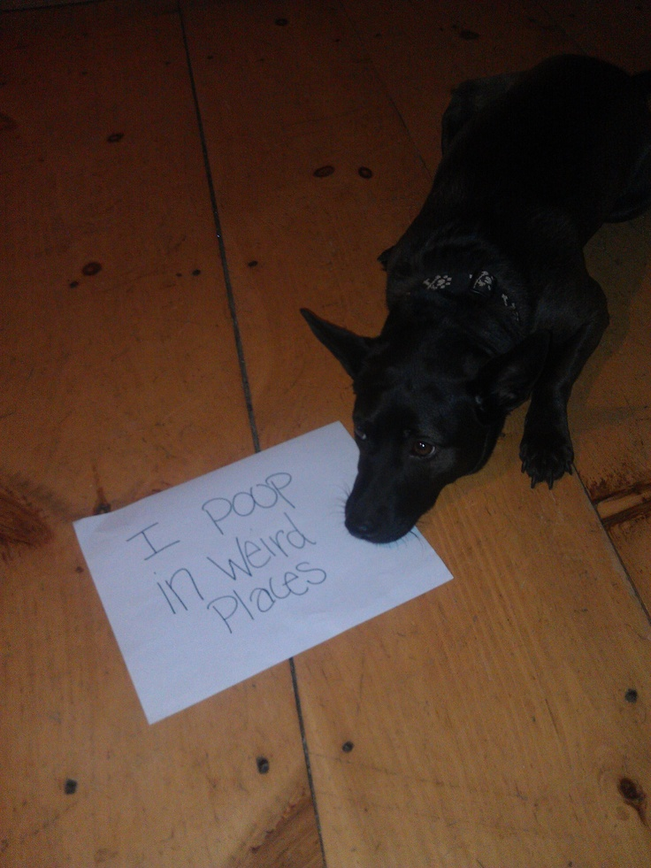 90 best images about pet shaming on pinterest my mom for Loft 213 stone wrap