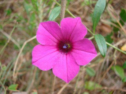16 best plantas ornamentales images on pinterest for Definicion de plantas ornamentales