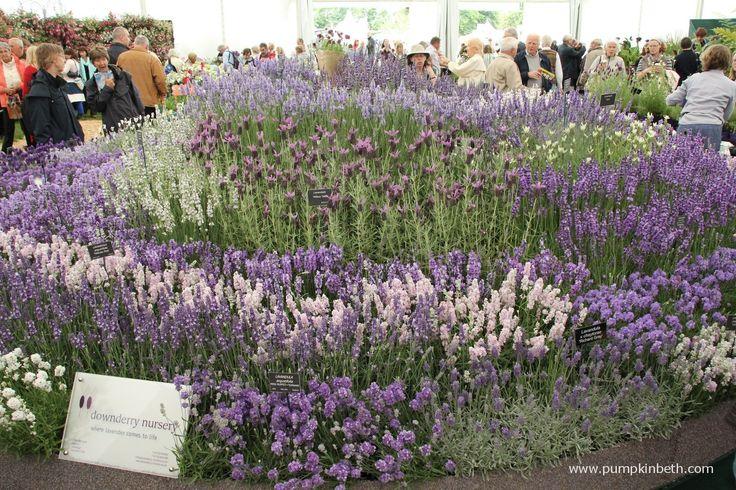 Specialist Plant Fairs, Festivals, Sales And Swaps - Pumpkin Beth