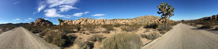 Joshua Tree Nationalpark - USA - California - USA-Tour 2015