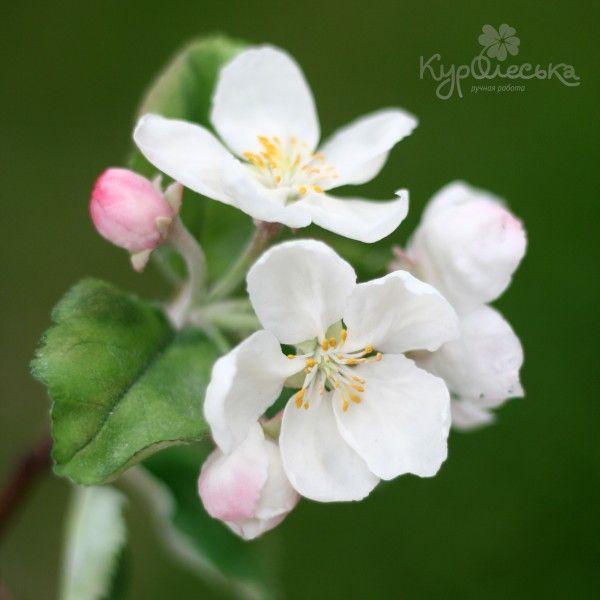 Вот такая веточка яблоньки у меня получилась. Вдохновлялась оригиналом. Глинка Модена клэй и софт. Понаделала себе вайнеров с натуральных лепестков. У меня была…