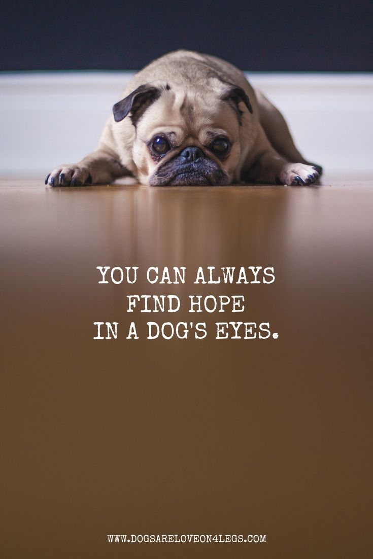 Dog Quote You Can Always Find Hope In A Dog S Eyes Dog Quotes