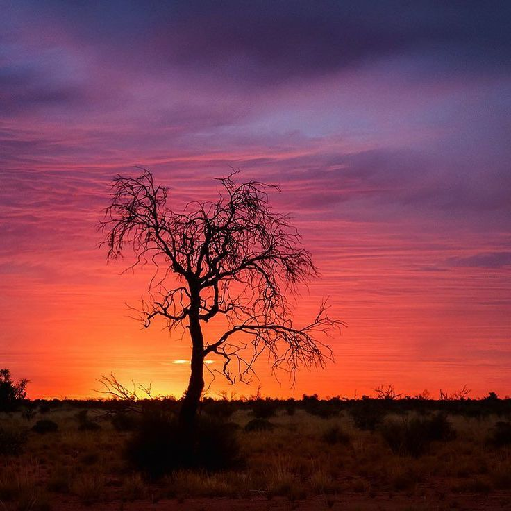 Lonely Pilbara trees make great silhouettes during those amazing outback sunsets!