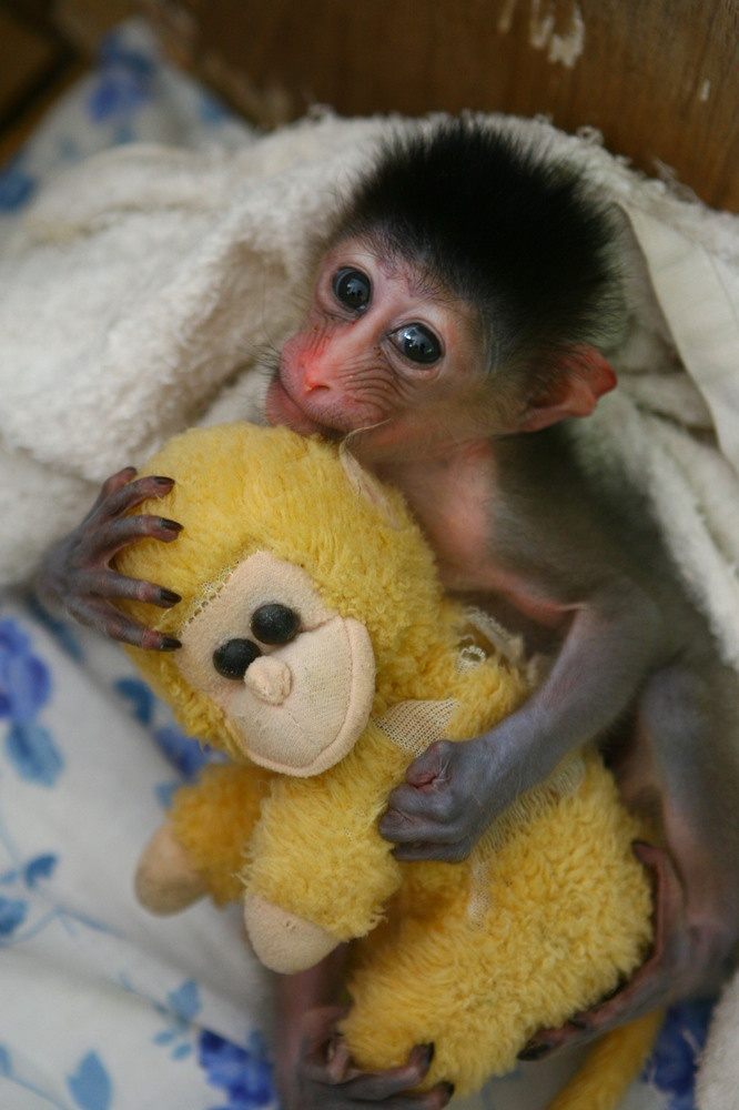 Bichinos de la semana: bebés monos muuuuuuuuuuy monos (FOTOS)