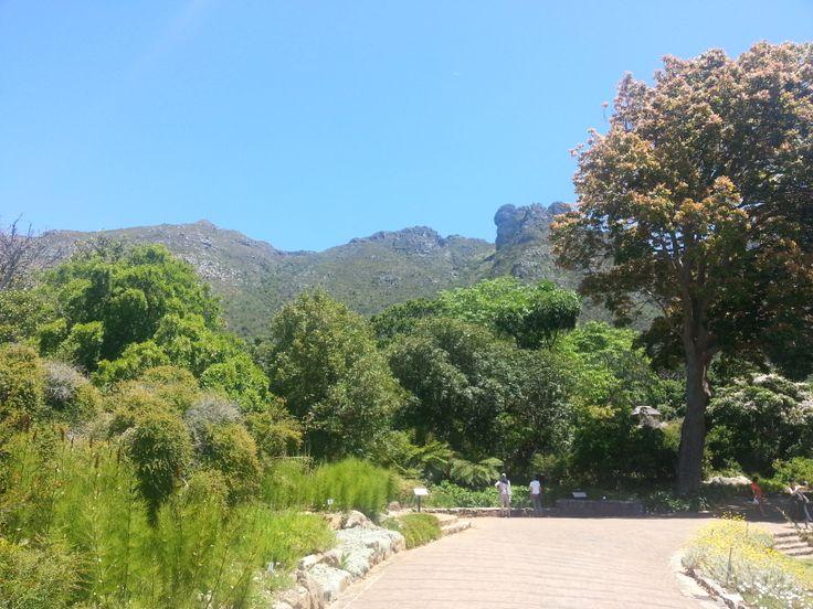 below the mountains in Kirstenbosch Gardens