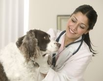 Les soins vétérinaires sont souvent des opérations délicates : l'animal est effrayé, le maître est inquiet . Le vétérinaire a besoin d'être assisté par une personne experte.