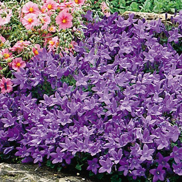 Shade Garden Ideas Zone 6 322 best garden plants zone 8 images on pinterest | flower