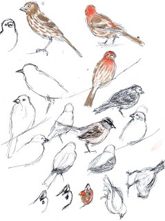 Sketching in Nature: Learning to sketch birds