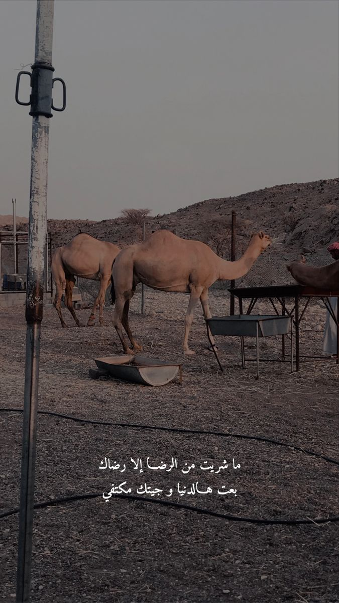 بدو عمان خلفيات عزبة Iphone Wallpaper Quotes Love Cover Photo Quotes Love Quotes Wallpaper
