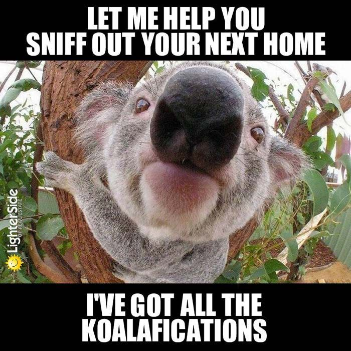 buying a house with no job best 20 real estate humor ideas ...