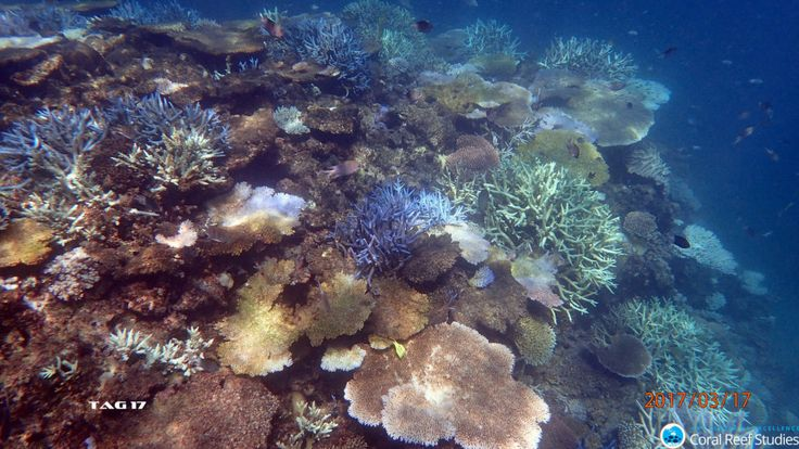 Coral bleaching is getting more severe and occurring more frequently, and the chance of saving reefs is becoming ever slimmer.