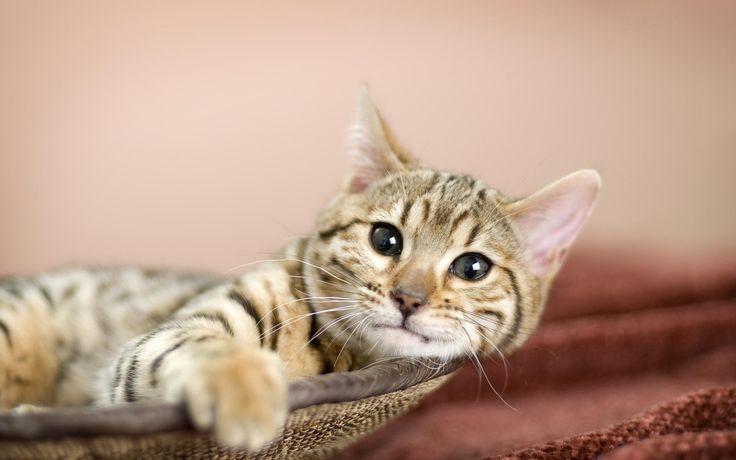 Bildresultat för cat wallpaper