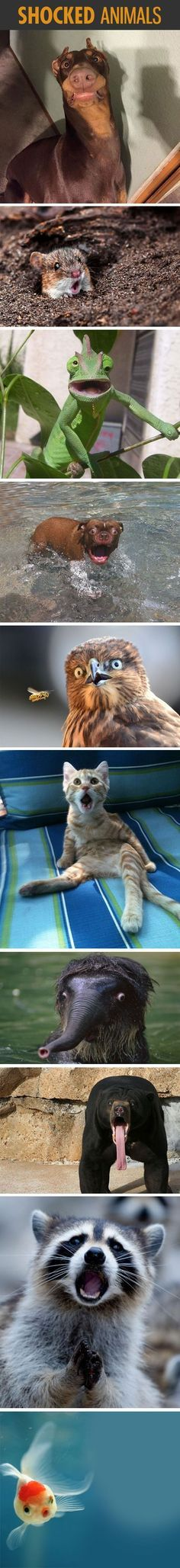 Shocked Animals funny cute animals dogs cat cats adorable animal kittens pets lol kitten humor wild animals funny animals