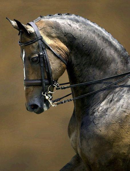 Amazing horse ~ Amazing colours