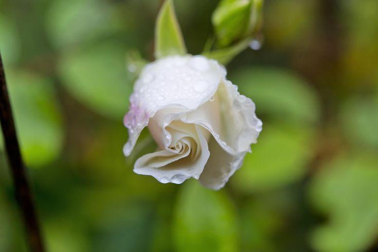 Every season brings magic to the Rosebank Cottage garden