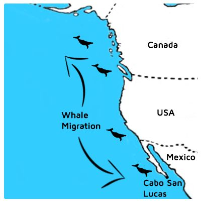 Best Humpback Whale Migration Ideas On Pinterest Whales - Map of us gold migration