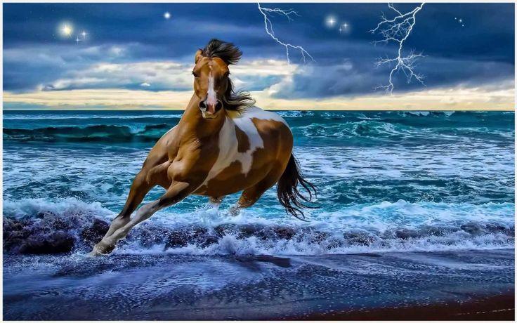 1000 ideas about running horses on pinterest horses