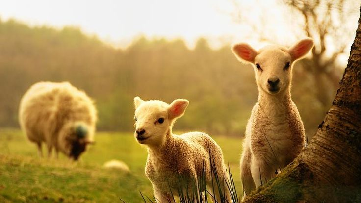 How to Raise Farm Animals