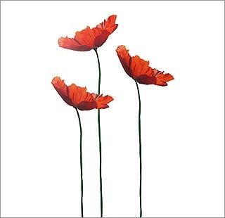 Flores de grandes dimensiones