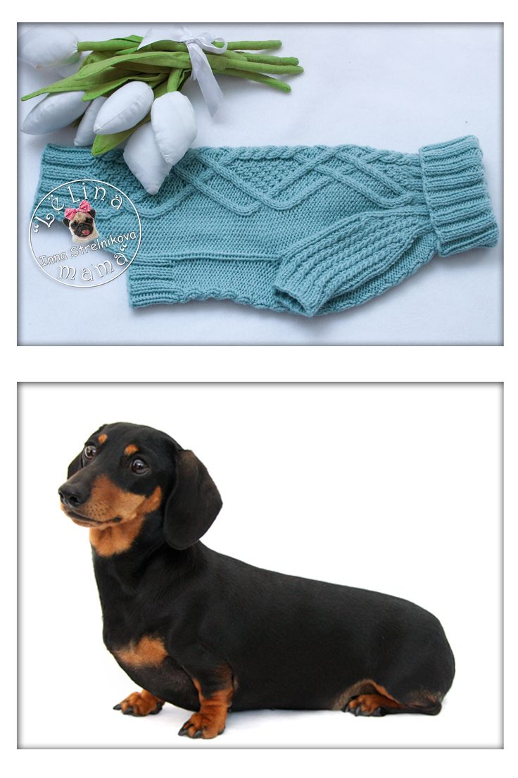 23 best БАСЕ... images on Pinterest | Dog accessories, Dog clothing ...