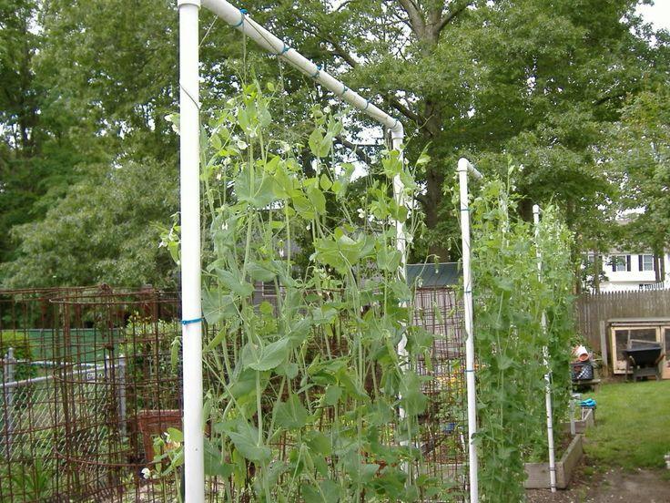 Pvc Trellis For Vines Garden Trellis Pea Trellis Trellis
