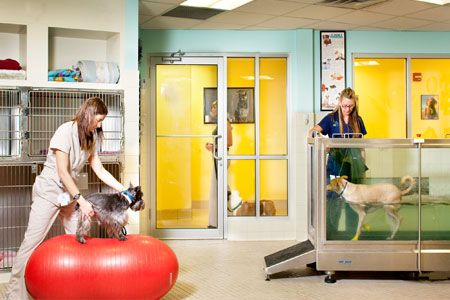Rehab room - Coral Springs Animal Hospital in Coral Springs, Fla. - 2012 Veterinary Economics Hospital of the Year