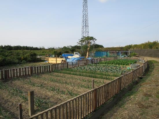 イメージ0 - 農園訪問者の画像 - 秘境の別荘暮らし - Yahoo!ブログ