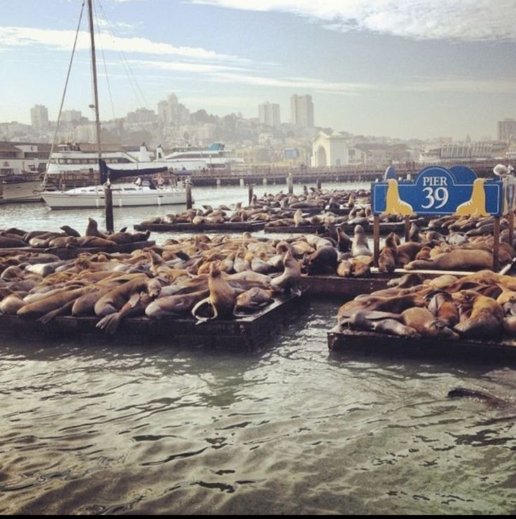 Pier 39 San Francisco Explore the World with Travel Nerd Nici, one Country at a Time. http://TravelNerdNici.com