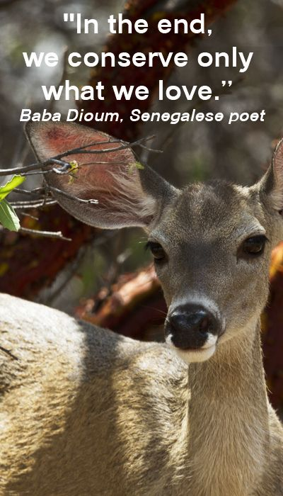"""""""In the end, we conserve only what we love."""" -- Baba Dioum, Senegalese poet – On F&J McGinn image of deer in RAMSEY CANYON, AZ.  Learn about the importance of connecting children to nature -- http://www.examiner.com/article/build-healthy-connections-to-nature?no_cache=1400184278"""