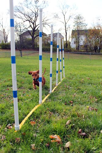 Weave poles are one of the most challenging obstacles in dog agility training, so it's helpful to have some at home for practice. Here's what you'll need and how to set them up.