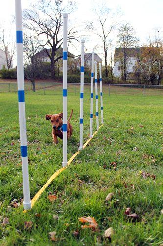 DIY Dog Agility Weave Poles with the Dog Agility Shop // Ammo the Dachshund