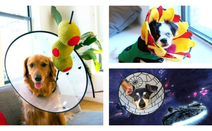 3 Creative Ways To Turn Your Dog's Cone Of Shame Into The Cone Of Game