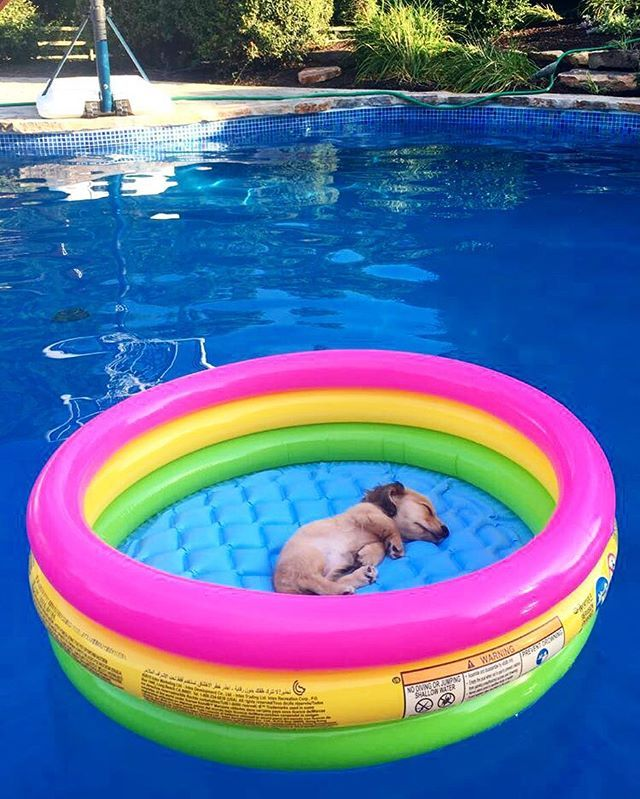 Today was really tough #puppyvacation #sundaze #backtoworktomorrow…