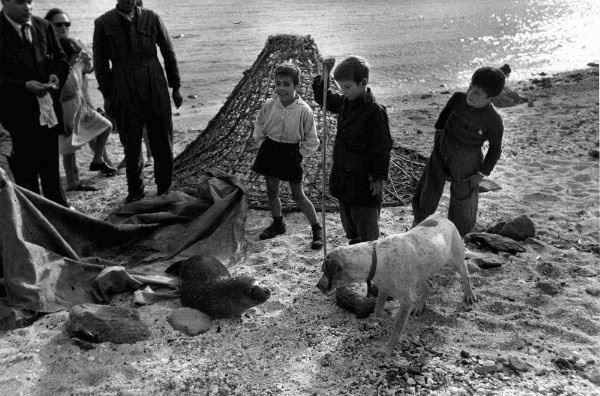 Quando a Cala Gonone , Sardinia , c'erano ancora le foche monache (1961). Foto: Federico Patellani