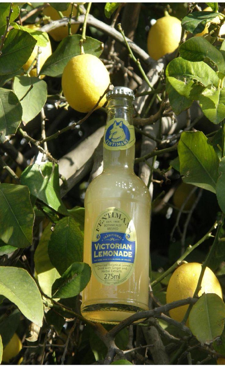 Delicious Fentimans Victorian Lemonade perching in a lemon tree!