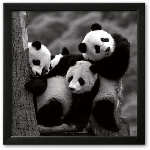 I love pandas.