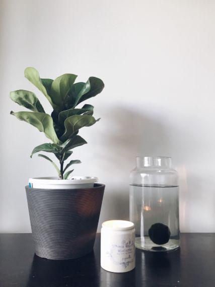 Indoor plant & marimo moss ball.