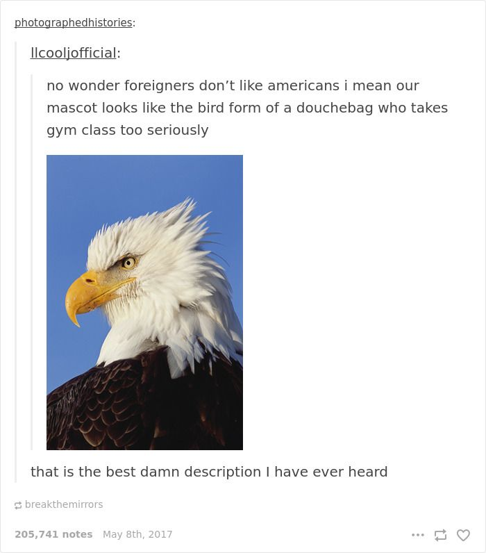 33+ Times Americans Were Hilariously Roasted On Tumblr