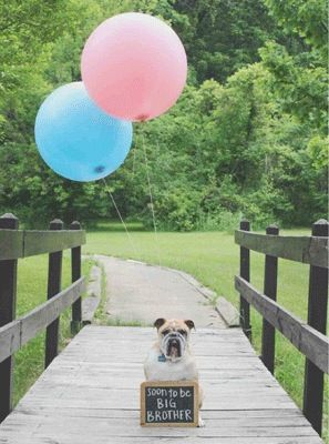 Announcing your first pregnancy with your beloved furbaby