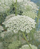 Organic Flower Seeds Online