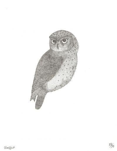 Little Owl | Hello Polly