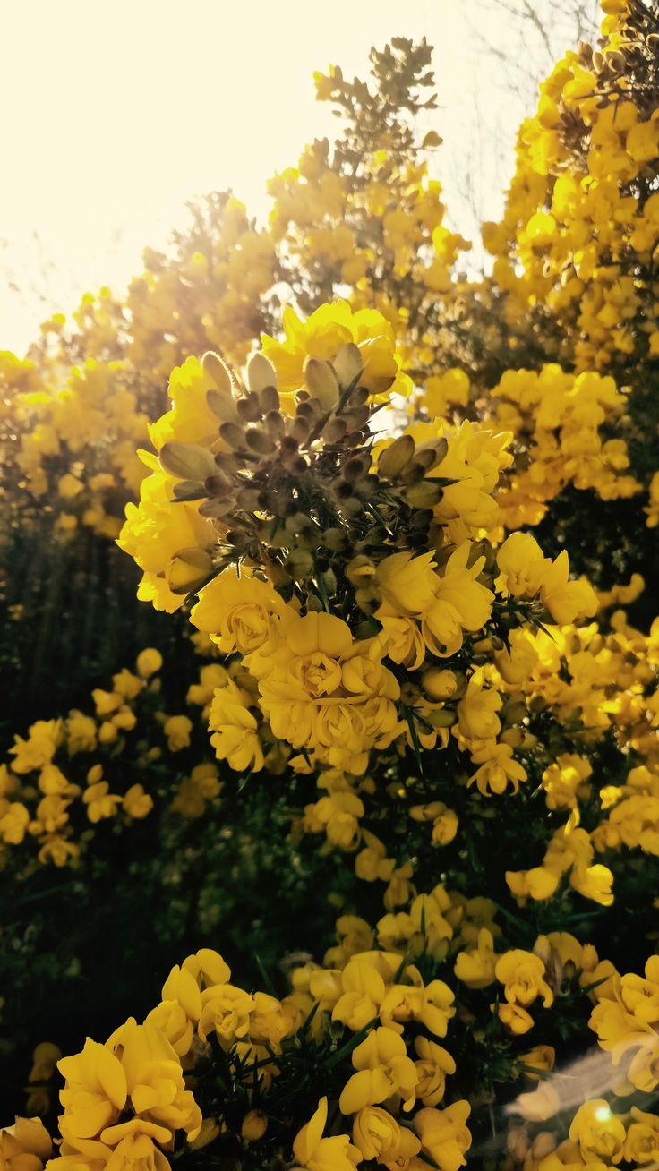 Flowers. – ᵖʰᵒᵗᵒ ᵇʸ ˢᵒᵒᵖˢᶦᵉ ᵍᵃᵗʷᵒᵒᵈ Lingfield, Surrey, UK.