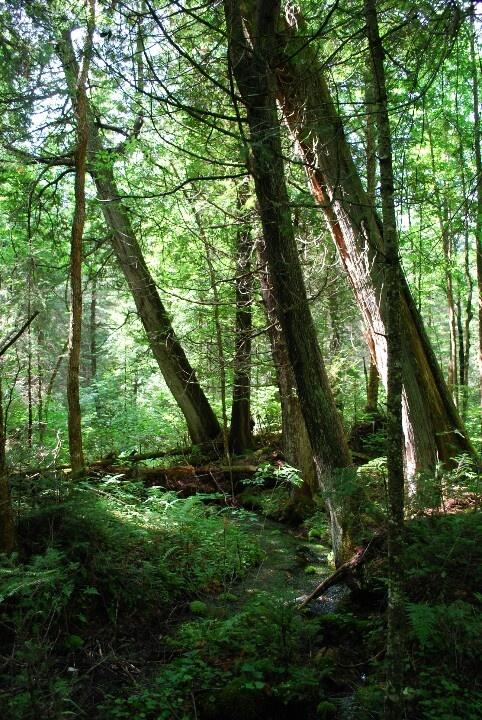 Algonquin National Park, Canada