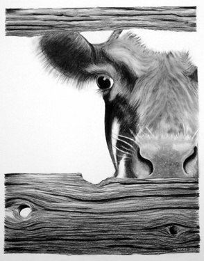 17 Best images about Cows and other Animals on Pinterest ...