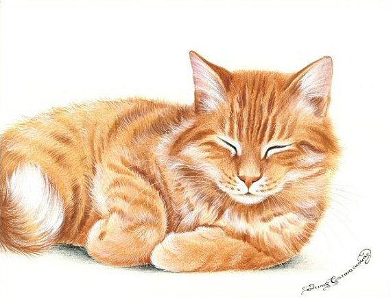 Gingembre Cat Print de siestes par Irina par irinagarmashova