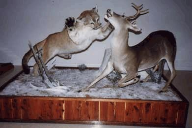 10 Spectacular Big Game Mounts That Will Make Your Jaw Drop