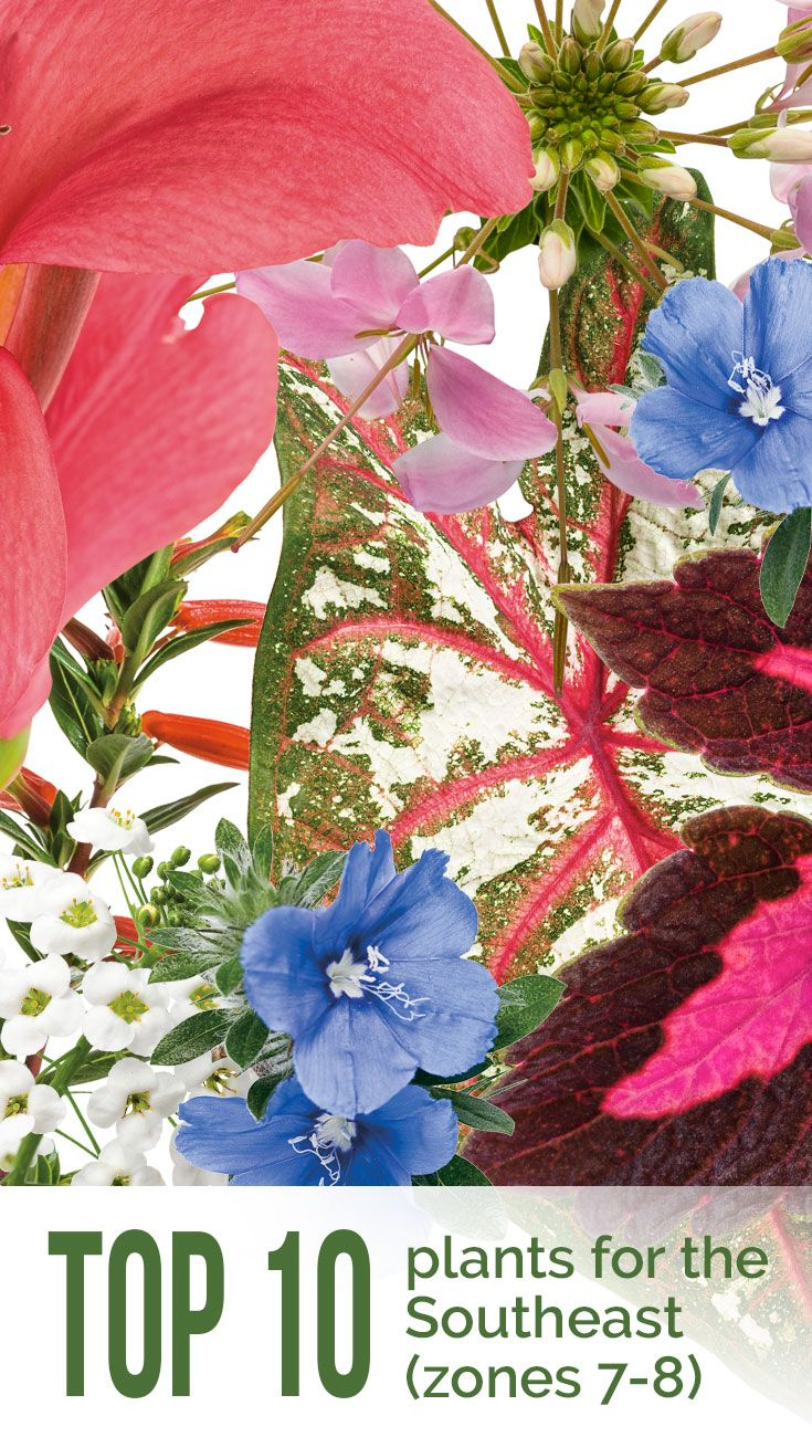 11 Best Top 10 Plants For Your Area Images On Pinterest