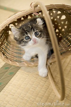 A lovely kitty in the bamboo basket