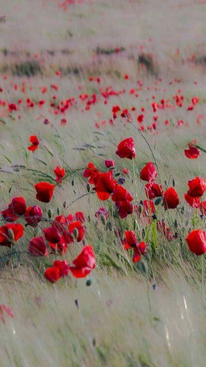 Poppies & grasses swaying in the field. So lovely!