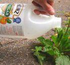 El vinagre es uno de los productos más versátiles que podemos tener en nuestra cocina. A parte de su uso para condimentar los alimentos, este producto sirve para muchas cosas más. Anuncios Uno de esos usos, es para mantener nuestro jardín impecable. A diferencia de los fertilizantes comerciales, el vinagre no le hace daño al medio …